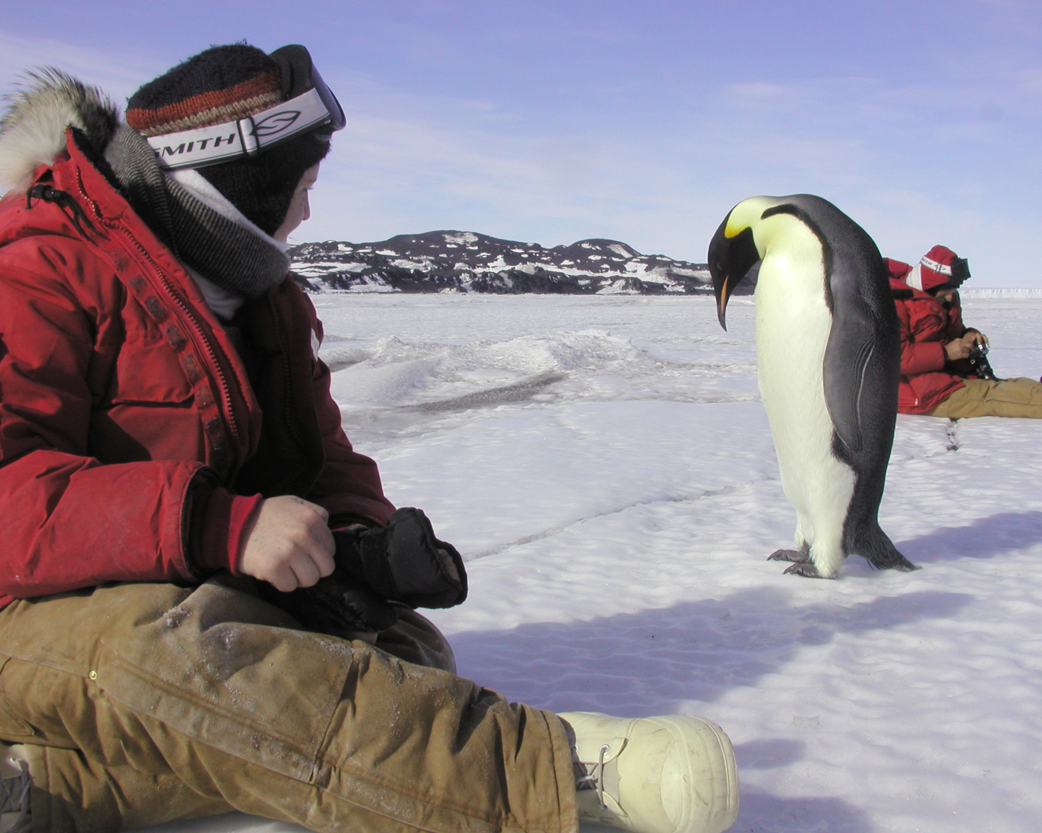 Researcher Anne Petzel watches an emperor penguin on the sea ice near Cape Royds.